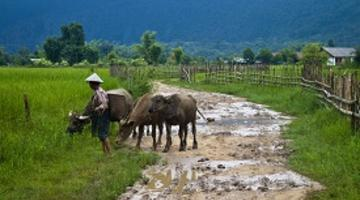 Countryside, Laos
