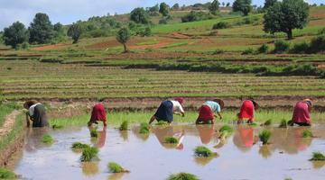 Paddy fields, Kalaw