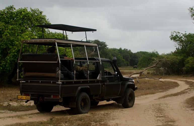 Jeep, Leopard Trails Safari Camp