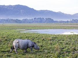 Rhino in Kaziranga National Park