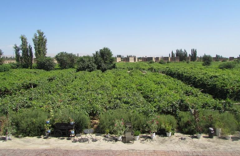 View, Silk Road Lodges - The Vines