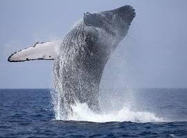Whale-watching, Sri Lanka