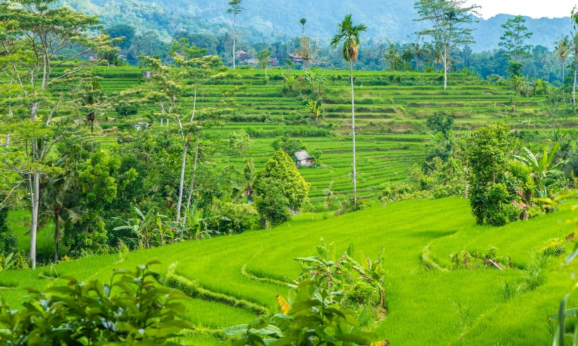 Rice terraces, Sidemen