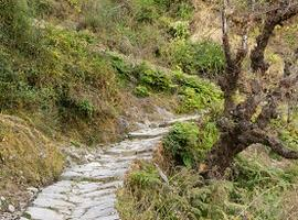 Trekking path in Almora, India