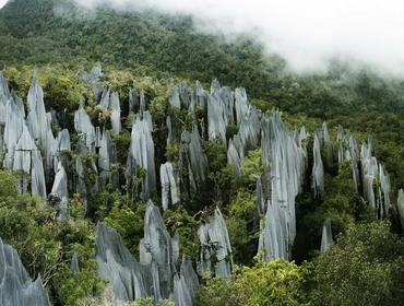 Pinnacles, Mulu National Park