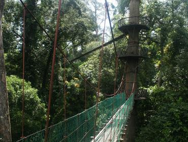Canopy walk, Danum Valley