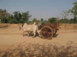 Ox cart, Bagan
