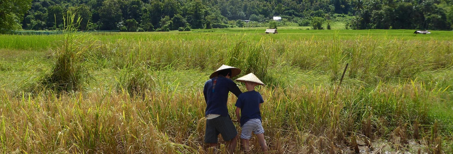 rice farming experience in laos