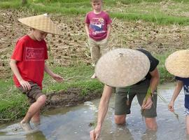 Rice farming experience Laos