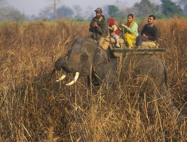 Elephant back safari, Kaziranga National Park