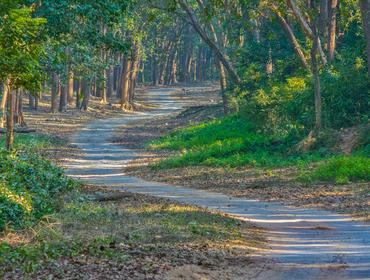 Road in Jim Corbett National Park