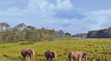 Elephants, Chitwan National Park