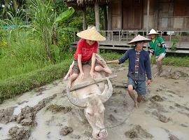 Rice farming experience, Laos