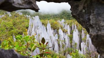 Limestone pinnacles, Mulu National Park