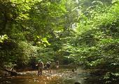 Explore the Kanneliya Rainforest