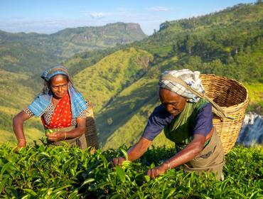 Tea ladies, Sri Lanka